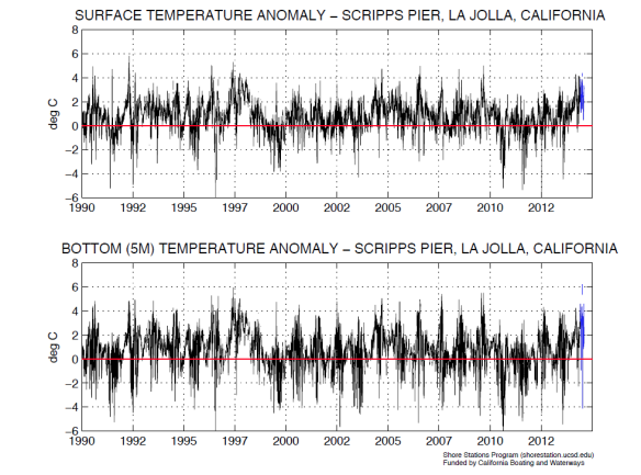 Daily surface and bottom temperature anomaly from the Scripps Pier Manual Shore Station, La Jolla, California.  Anomalies are produced by subtracting the long-term harmonic mean (1916-2001) from the daily temperature (a positive anomaly indicates that temperatures are warmer than average). Temperature data from June 1 to August 5, 2014 (shown in blue) are preliminary and unverified (graphs produced by Melissa Carter of the Shore Stations Program).